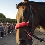 Anna Maria Ulargiu Il cavallo che sorride